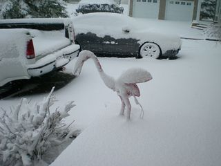 Frozen-Flamingo